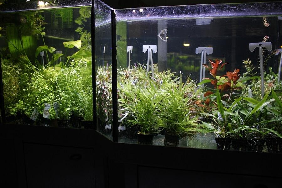 Pour tous les aquariums